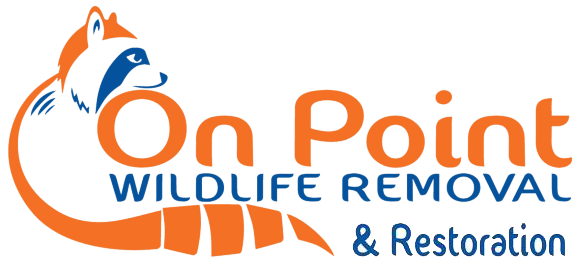 On Point Wildlife Removal Melbourne, Florida